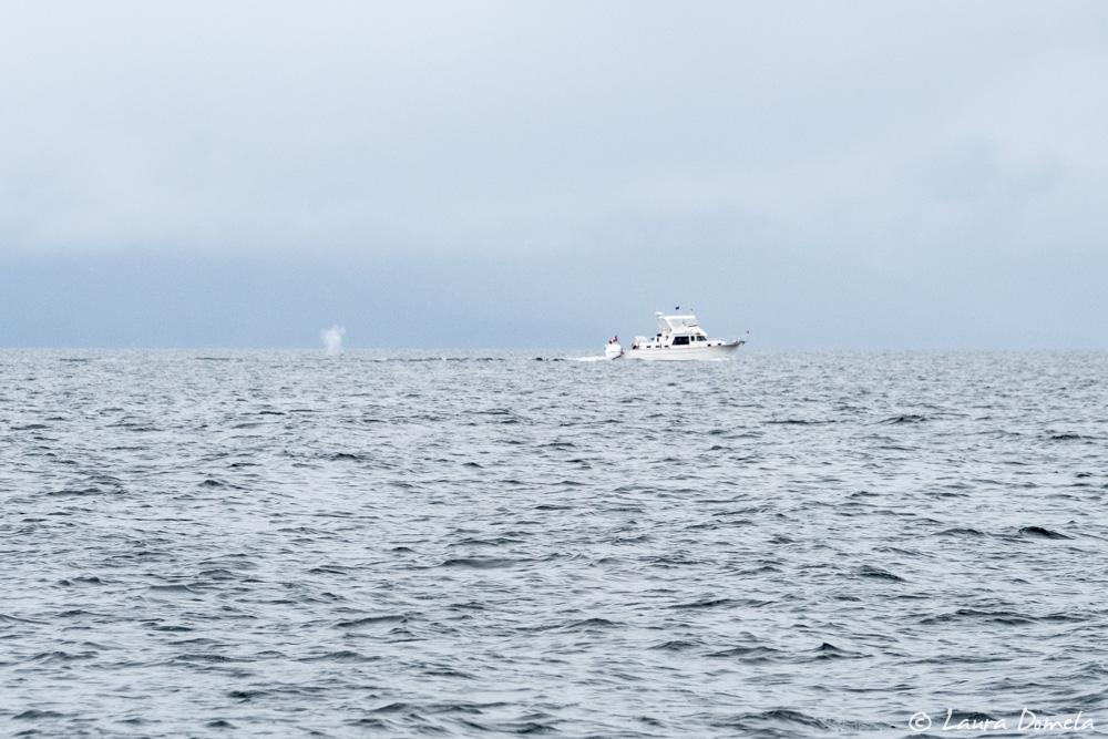Day 26 Flotilla To Alaska Pybus Bay To Red Bluff Bay